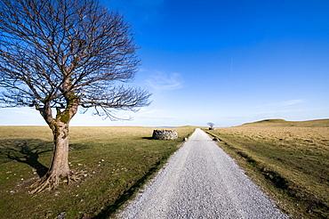Tree above Malham, Yorkshire Dales, Yorkshire, England, United Kingdom, Europe