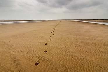 Theddlethorpe Beach, Lincolnshire, England, United Kingdom, Europe