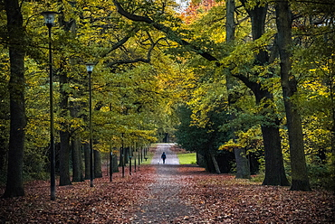 Dog walkers, Norfolk Park, Sheffield, Yorkshire, England, United Kingdom, Europe