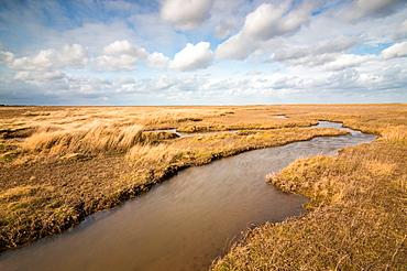Theddlethorpe Dunes, Lincolnshire Coast, Lincolnshire, England, United Kingdom, Europe