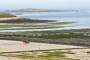 Mussel beds, Brittany, France, Europe