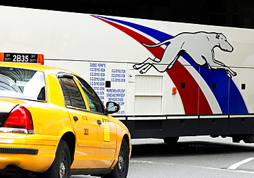 Yellow taxi and Greyhound Bus, New York City, United States of America, North America