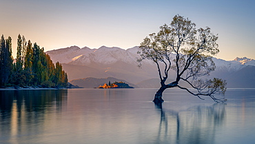 Wanaka Tree, Lake Wanaka with the snow capped peaks of Mount Aspiring National Park, Otago, South Island, New Zealand, Pacific