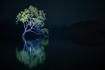 That Wanaka Tree against the stars at night, Otago, South Island, New Zealand, Pacific