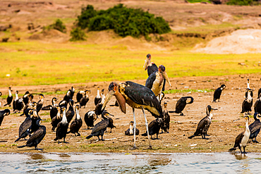 Wild birds in Queen Elizabeth National Park, Uganda, East Africa, Africa