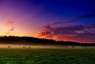 Farmland of Auburn at sunrise, Washington State, United States of America, North America