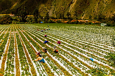Farmland at El Albergue next to Peruvian mountains, Peru, South America