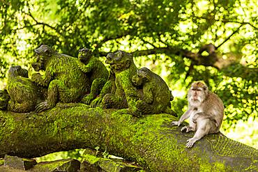 Sacred Monkey Forest in Ubud, Bali, Indonesia, Southeast Asia, Asia