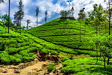 Scenic of the tea country in Sri Lanka, Asia