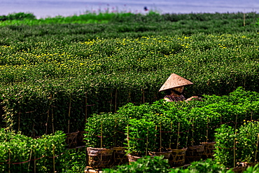 Village farmers in the Mekong Delta away from the intense city life of Saigon, Vietnam, Indochina, Southeast Asia, Asia