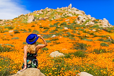 California Superbloom, female traveller in blue hat visits Poppy fields of Lake Elsinore, California, United States of America, North America