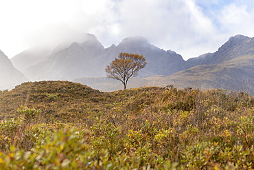 A lone tree and the Cuillins mountains on The Isle of Skye in the Inner Hebrides, Highlands, Scotland, United Kingdom, Europe