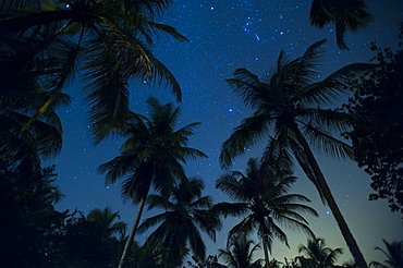 Swaying palm fronds and stars at Palomino on the Carribean coast of Colombia, South America