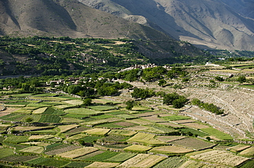 Wheat fields in the Panjshir Valley, Afghanistan, Asia
