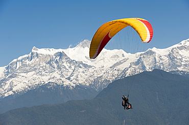 A tandem paraglider flys above Pokhara with views of the Annapurnas, Nepal, Himalayas, Asia