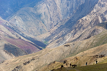 Trekkers and ponies make their way down from the Konze La during the Hidden Valleys trek in Ladakh, Himalayas, India, Asia