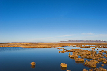 Huahu (Flower Lake), an important wetland area which supports a large array of biodiversity on the Tibetan plateau, Sichuan Province, China, Asia
