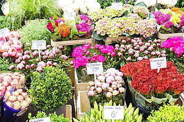Flowers for sale in the Bloemenmarkt (flower market), Amsterdam, North Holland, The Netherlands, Europe