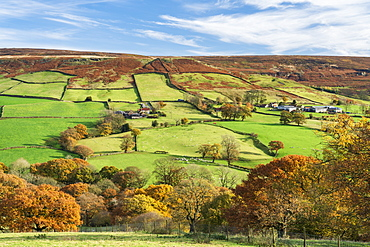 Autumn sunlight over green fields and deciduous woodland in Farndale, The North Yorkshire Moors, Yorkshire, England, United Kingdom, Europe