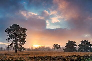 Strensall Common Lowland Heath Nature Reserve near York, North Yorkshire, Yorkshire, England, United Kingdom, Europe