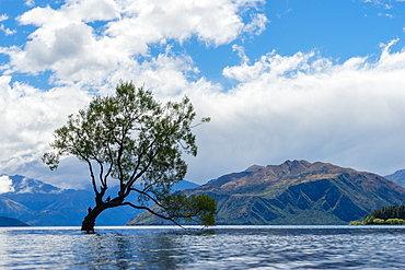 A lonely tree is silhouetted in a lake in the mountains, Wanaka, Otago, South Island, New Zealand, Pacific