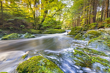 Tollymore Forest Park, Shimna River, County Down, Ulster, Northern Ireland, United Kingdom, Europe