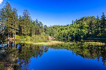 Loch Ard, Loch Lomond and Trossachs National Park, Scotland, United Kingdom, Europe