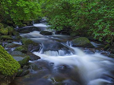 Killarney National Park, County Kerry, Munster, Republic of Ireland, Europe