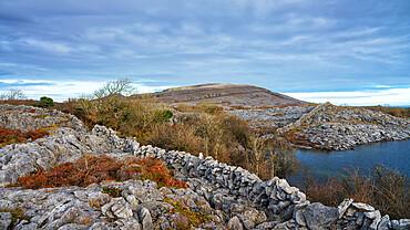 Burren National Park, County Clare, Munster, Republic of Ireland, Europe