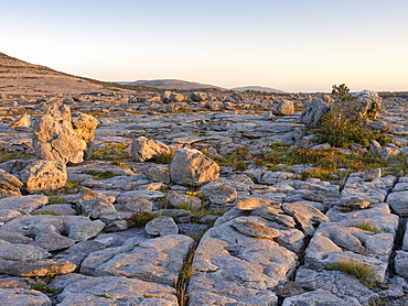Rockforest, The Burren, County Clare, Munster, Republic of Ireland, Europe