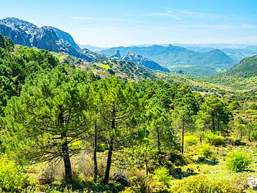 Sierra de Grazalema, Andalucia, Spain, Europe