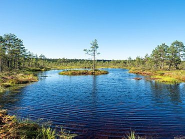 Viru bog, Lahemaa National Park, Estonia, Baltics, Europe