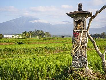 Rice paddies with shrine and Mount Batukaru, Bali, Indonesia, Southeast Asia, Asia