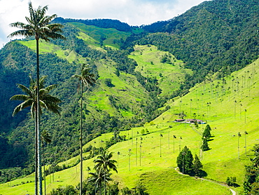 Valle de Corcora, near Salento, Colombia, South America