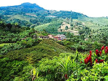 Hillside farm with coffee and banana plants, Jardin, Antioquia, Colombia, South America
