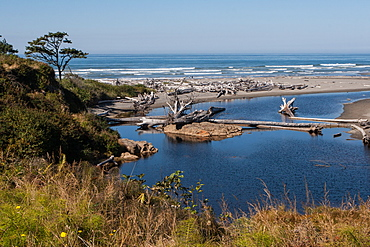 Pacific coast beach with driftwood, Olympic National Park, UNESCO World Heritage Site, Washington State, United States of America, North America