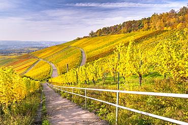 Vineyard Kappelberg, Herbst, Baden-Wurttemberg, Germany, Europe - 1244-7