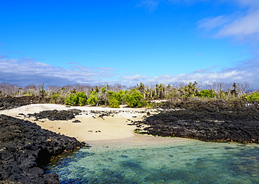 Beach in the Dragon Hill area, Santa Cruz (Indefatigable) Island, Galapagos, UNESCO World Heritage Site, Ecuador, South America
