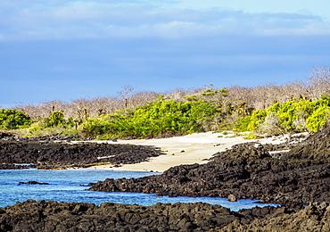 Landscape of the Dragon Hill area, Santa Cruz (Indefatigable) Island, Galapagos, UNESCO World Heritage Site, Ecuador, South America