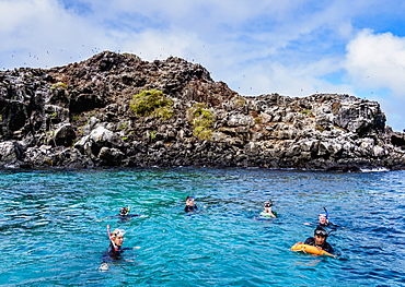 Snorkelling by the Islote Pitt, San Cristobal (Chatham) Island, Galapagos, UNESCO World Heritage Site, Ecuador, South America