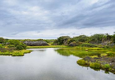 Flamingo Lagoon, Isabela (Albemarle) Island, Galapagos, UNESCO World Heritage Site, Ecuador, South America
