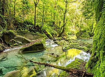 Reach Falls River, Portland Parish, Jamaica, West Indies, Caribbean, Central America
