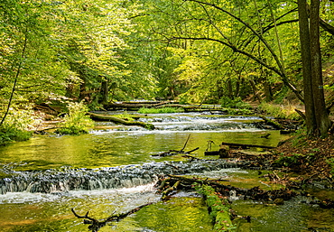 Cascades on the Tanew River, Szumy nad Tanwia, Tanew Nature Reserve, Roztocze, Lublin Voivodeship, Poland, Europe