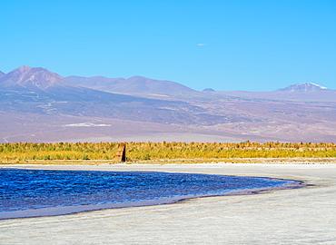 Laguna Baltinache, Salar de Atacama, Antofagasta Region, Chile, South America