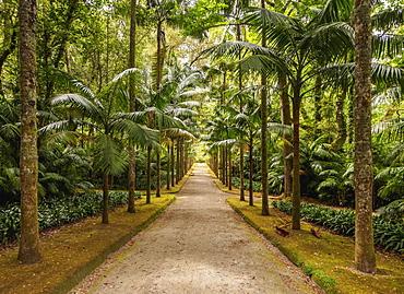 Terra Nostra Park, Furnas, Sao Miguel Island, Azores, Portugal, Atlantic, Europe