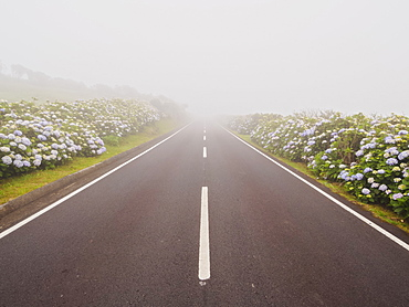 Misty road on Flores Island, Azores, Portugal, Atlantic, Europe