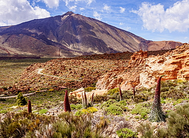 Tajinaste Rojo (Echium Wildpretii), endemic plant, Teide in the background, Teide National Park, UNESCO World Heritage Site, Tenerife, Canary Islands, Spain, Europe