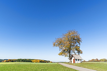 Little chapel under a tree, Schwenningen, Baden-Wurttemberg, Germany, Europe