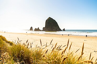 Haystack Rock and The Needles, with Gynerium spikes in the foreground, Cannon Beach, Clatsop county, Oregon, United States of America, North America