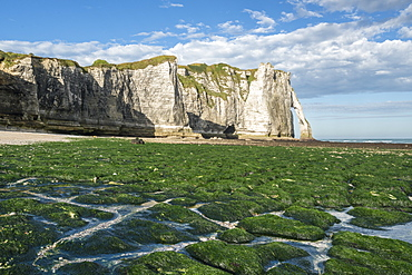 Porte d'Aval with low tide and seaweed on the beach, Etretat, Normandy, France, Europe